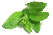 Stevia leafs
